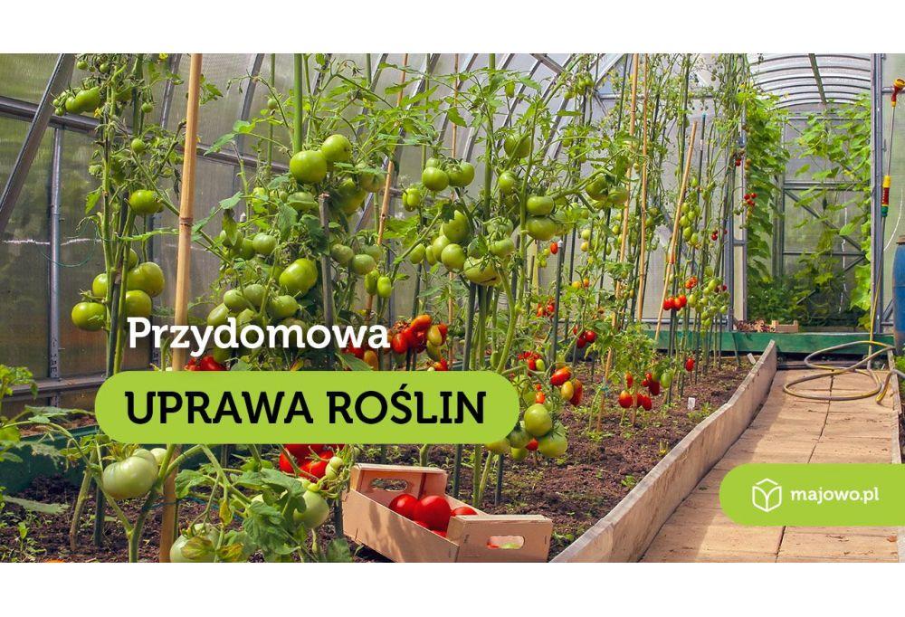 Przydomowa uprawa roślin - Szklarnia ogrodowa