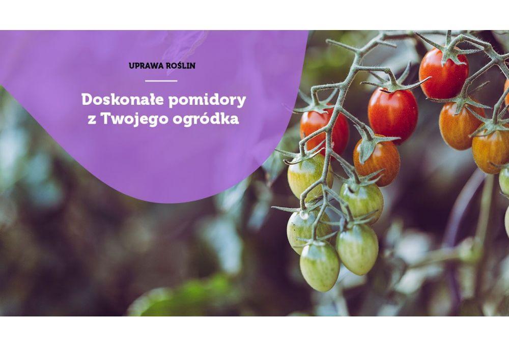 Uprawa pomidorów - jaka szklarnia ogrodowa najlepsza?