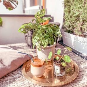 Znacie przepis na pyszną kawę po koreańsku?  ☕ Do miski należy wsypać kawę, cukier, ciepłą wodę i ubijać na najwyższych obrotach miksera do uzyskania puszystej pianki. ☕ Do szklanek przelać mleko, i na wierzch nałożyć piankę kawową.  Przepis idealny na popołudniową kawę na tarasie! 💚 Poznajecie naszą skrzynię ogrodową, na której stoi taca z kawą? 🥰 📸@gosia_skowronska  #Majowo #majowo_pl #coffeetime #coffeeplace #coffee #coffeelovers #coffeevibes #coffeeaddict #coffeeporn #koreancoffee #kawa #kawusia #kawka #balkon #wiosna #maj #odpoczynek #gardeninspiration #gardenideas #gardenfurniture #furniture #meble #meblebalkonowe #zieleńnabalkonie
