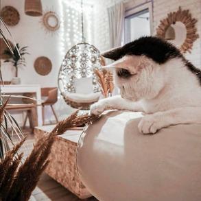 ❓Czy wiecie, że dziś jest światowy dzień kota? ⤴️Przedstawiamy Wam naszą najwierniejszą kocią fankę - Balbinę.🐈❣️ Koty cenią sobie luz i wolność, nigdzie się nie spieszą (chyba, że poczują mięsko) i doskonale wiedzą jak zrelaksować się po 17 godzinach, niezwykle męczącego spania. ❓Jakich umiejętności chcielibyście nauczyć się od kotów?🐱 📸 @oliv.home ⠀ ⠀ #bohostyle #bohemian #homedecor #bohodecor #interiordesign #bohemianstyle #bohovibes #boholiving #homesweethome #apartmenttherapy #homedesign #aesthetic #interiorstyling #bohemiandecor #bohohomedecor #interiordecor #homeinspo #interiordecorating #dzieńkota #sobotakota #kociak #lovecatsforever #catstagram #catoftheday #kociezycie #catofinstagram